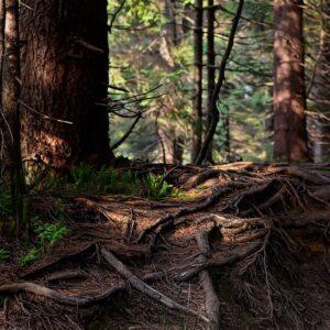 Zamiana gruntów leśnych dla celów inwestycyjnych – projekt nowej specustawy